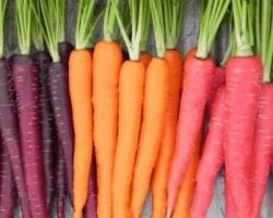 What you didn't know about carrots – they come in purple too